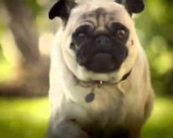 "DORITOS Unveils Superbowl Commercial ""Pug Attack"""