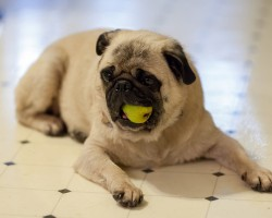 10 Unexpected Human Foods You Can Feed Your Dogs Without Worry