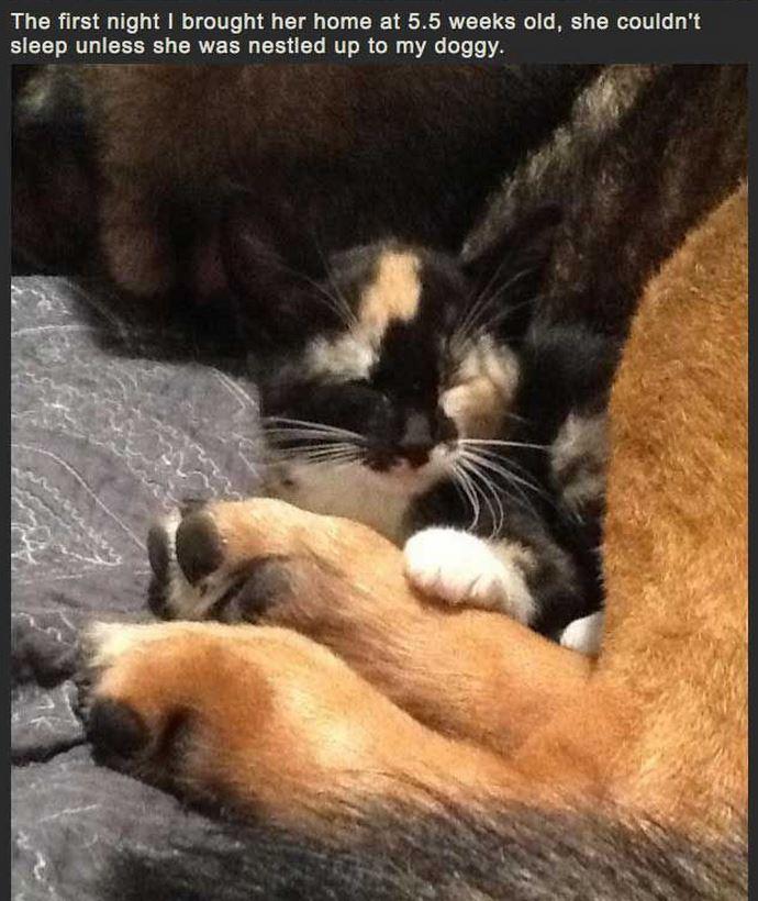 Cat Misses Dog 2