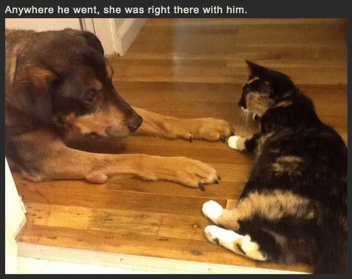 Cat Misses Dog 7