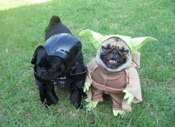 Darth Vader and Yoda Pugs