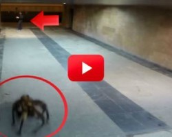 This Giant Spider Dog Prank Is The Most Terrifyingly Adorable Thing I've Ever Seen!