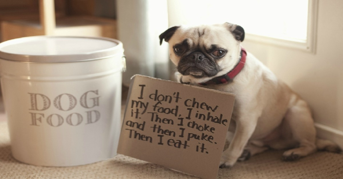 Pug shaming is the best kind of dog shaming here are 23 photos to