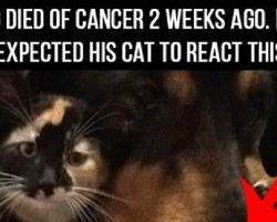 His Dog Died Of Cancer 2 Weeks Ago. The House Cat's Reaction Was Heartbreaking.