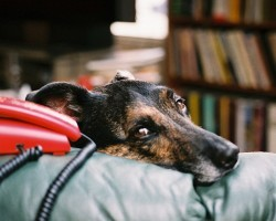 5 Phone Numbers That Should Be In Every Dog Owner's Rolodex