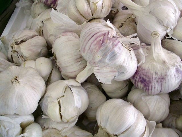 is garlic bad for dogs?