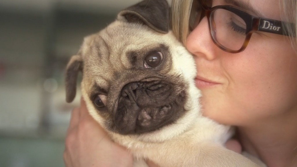 12-facts-that-prove-pugs-are-awesome
