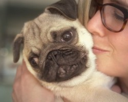 15 Signs You're A Crazy Pug Person… and Damn Proud To Be!