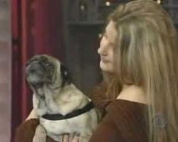 """Odie The Pug Says """"I Love You"""" On The Late Show with David Letterman"""