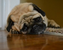 This Sad Dog Diary Will Make You Cry… From Laughter!!