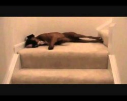You'll Never Believe What This Boxer Does Every Morning! I'm Stunned.