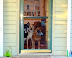 20 Things All Dog Owners Must Never Forget