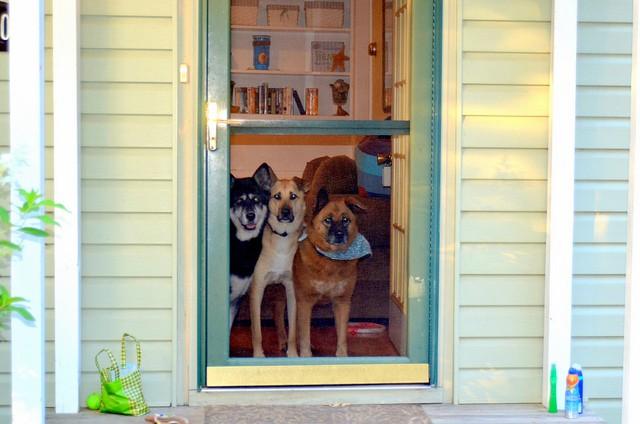 20 dog owner reminders - 1