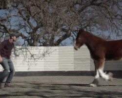 "Budweiser Unveils Super Bowl Commercial ""Brotherhood"""