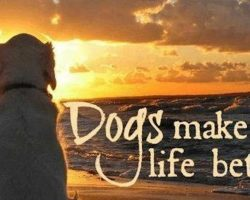 10 Things Dogs Teach Us About What Matters Most In Life