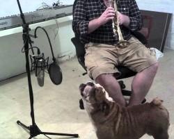 English Bulldog Sings Happy Birthday