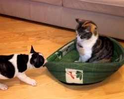 Puppy Wants His Bed Back From Cat. This Will Put A Smile On Your Face, Guaranteed!
