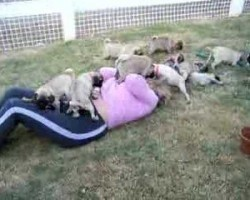 Puggy Heaven!!!