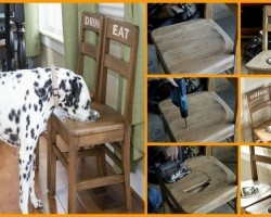 DIY Dog Bowl Chairs: What An Awesome Idea!