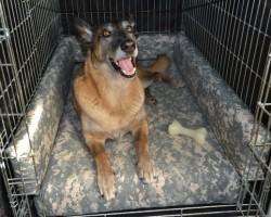 Super Comfy DIY Dog Kennel Bed