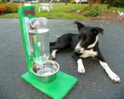 The Awesomest Coolest Easiest DIY Pet Water Bowl for DOGS & CATS!