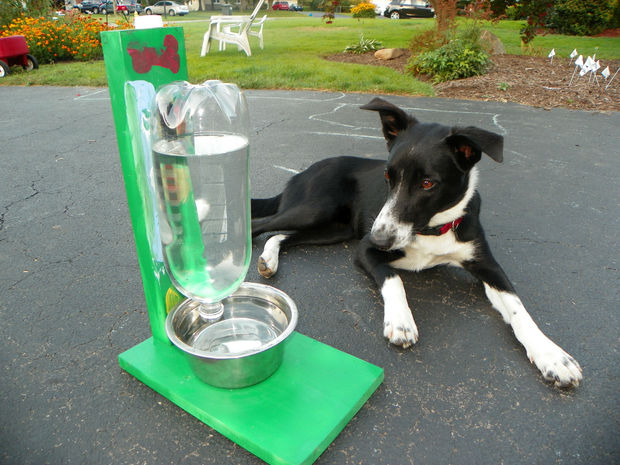 Picture of The Awesomest Coolest Easiest Water Bowl for DOGS & CATS!