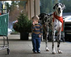 12 Realities New Great Dane Owners Must Accept