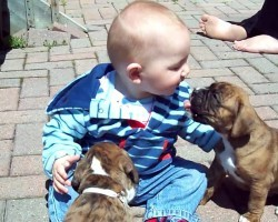 These Boxer Puppies and Baby Will Melt Your Heart Away
