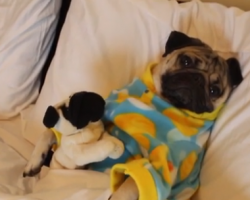 This Little Girl Singing A Bedtime Lullaby To Her Pug In Pajamas Will Melt Your Heart!