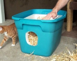 How to Build a Feral Cat Shelter