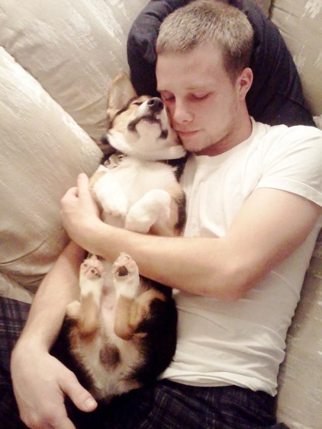 man sleeping with corgi pics