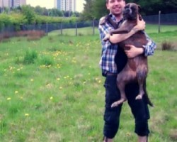 Have You Done Your Best For Your Dog? This Video Will Make You Laugh, Cry & Love Your Dog Even More!