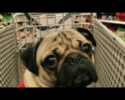 [PARODY] All I Want For Christmas Is Food by Doug the Pug