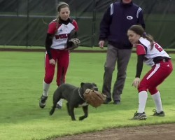 Dog Steals Show at University Softball Game