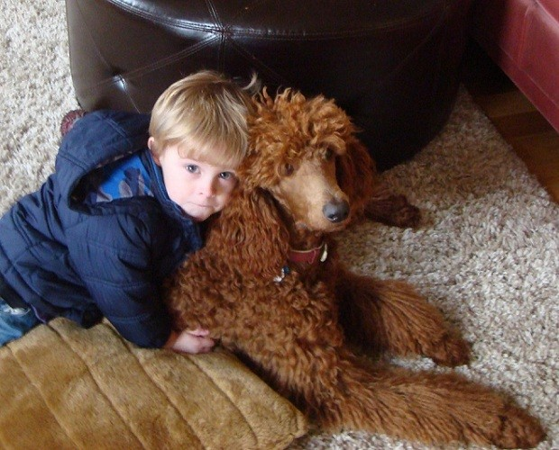poodle and child