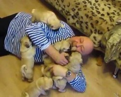 Russian Man Experiences Moment of Pure Joy via Pug Puppy Dog Pile