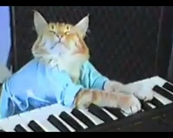The Keyboard Cat