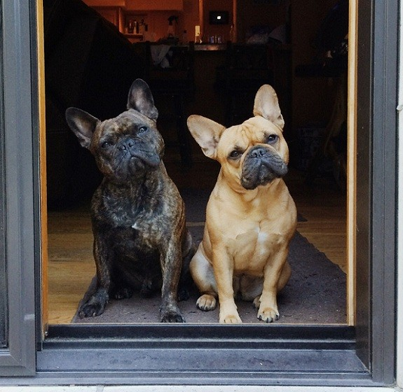 French Bulldogs door