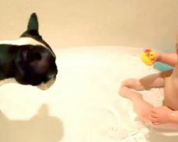 These Babies Laughing Hysterically at Dogs Will Put a Smile On Your Face, Guaranteed!