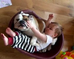 Baby Playing With Bulldog. OMG This Is Heartwarming!
