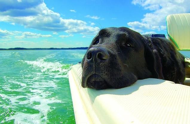 black lab trip boat