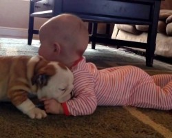 Bulldog Puppy Kissing A Baby Will Make Your Heart Melt