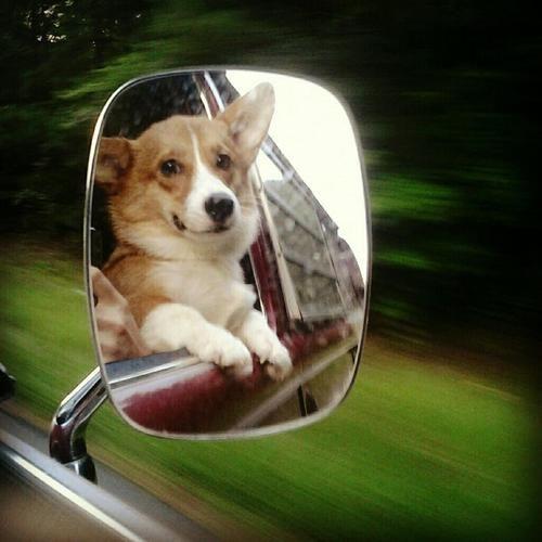 corgi mirror drive
