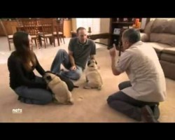 Have Dogs That Fight With Each Other? Watch How Cesar Millan Handles Them…