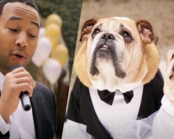 Dog Wedding With Private John Legend Concert Is Simply Pawsome!!