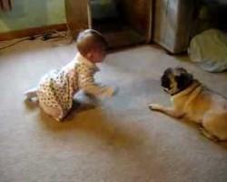 Cute Baby! Funny Pug! Two Peas In A Pod! So Precious :)
