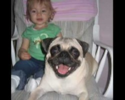 Little Girl And A Pug Becomes Inseparable. This Will Make You Cry Happy Tears!
