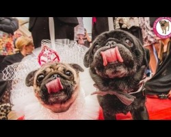 Two Rescue Pooches Got Married. You'll Be Shocked To See How OVER-THE-TOP Their Ceremony Was.
