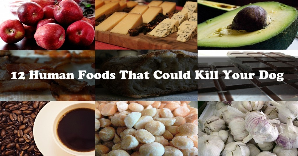 12 human foods_1200x628