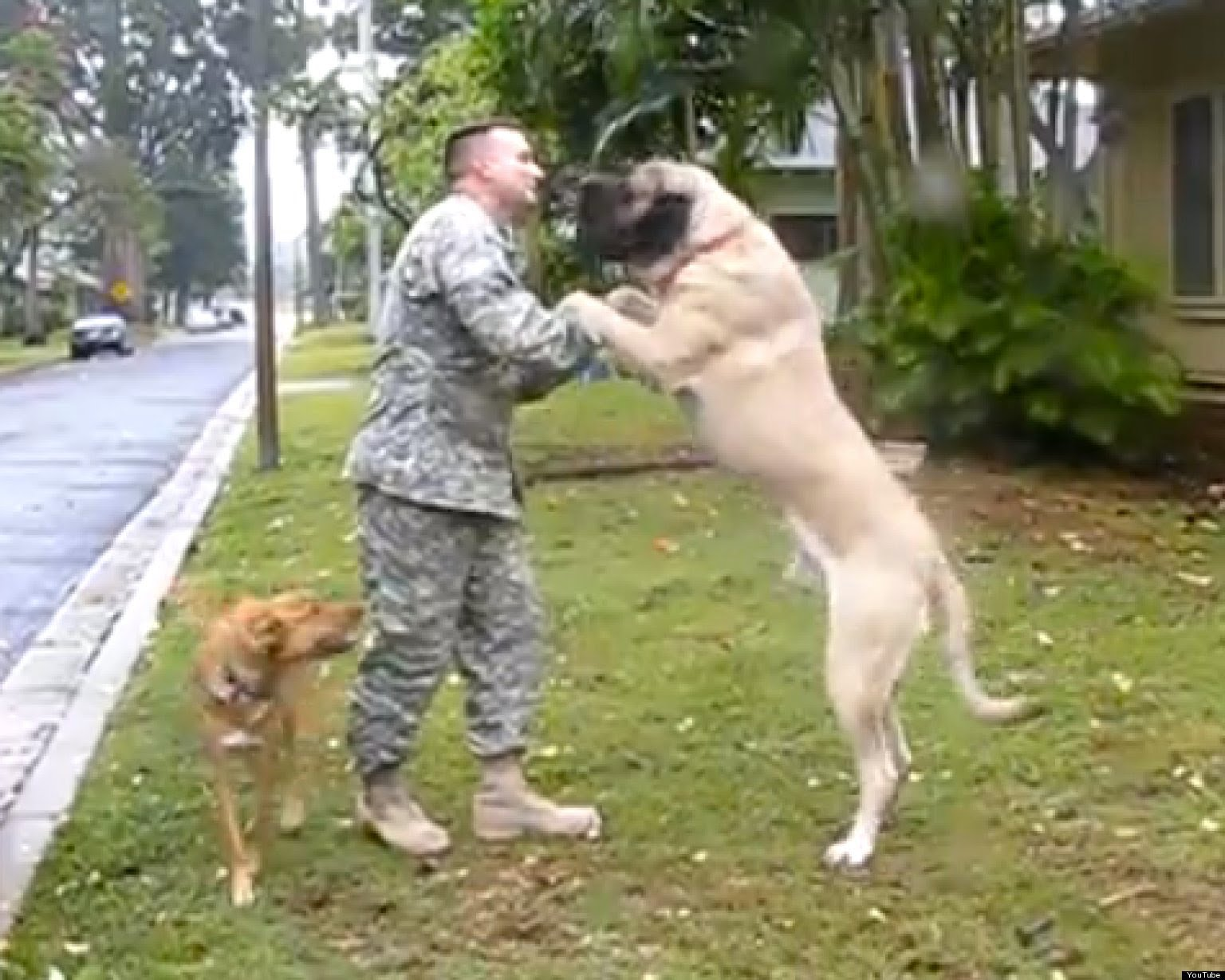 How These Dogs Welcome Home Soldiers Has People Crying Happy Tears